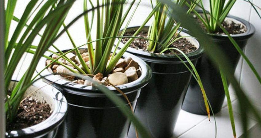 Piante Ufficio Ossigeno : Aria più pulita in casa e in ufficio grazie alle piante grasse
